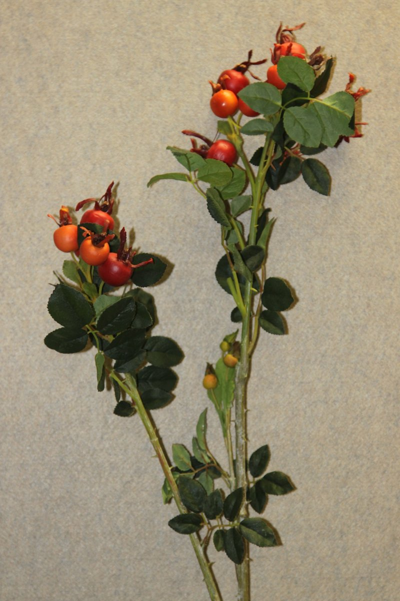 4775 ramo bacche a quattro service fiori artificiali for Fiori artificiali